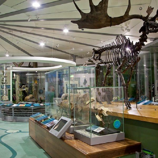 Leeds City Museum interior