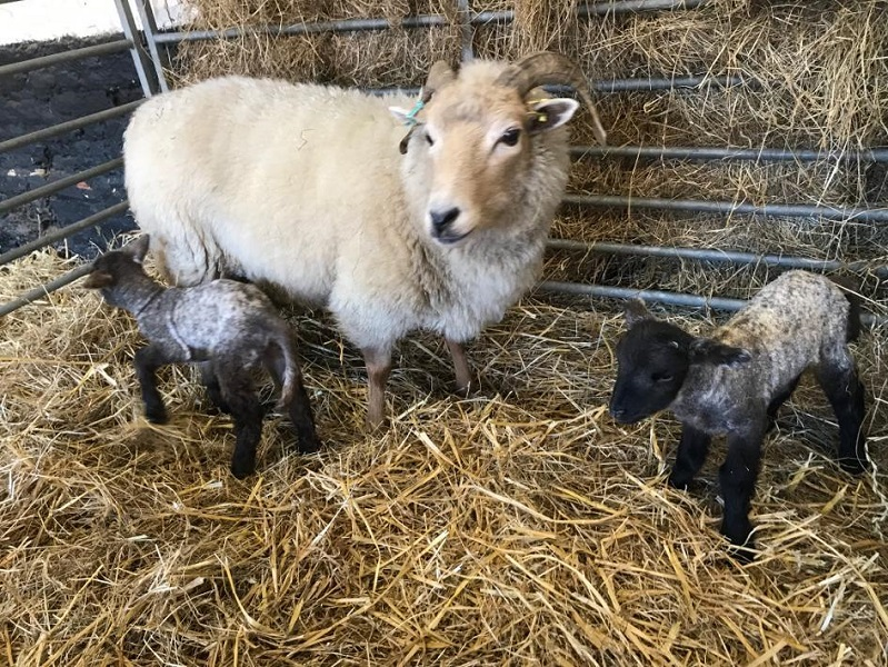 Temple Newsam Home Farm - Leeds Museums and Galleries